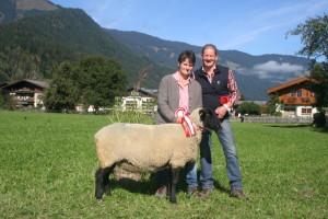 46  Gruppe - Suffolk - Schafe über 6 Jahre Sieger Stdn  645 Zuchtgemeins