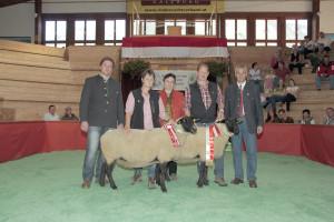 Landessieger Suffolk - Schafe Stdnr. 651 ZG Pointner, Bad Hofgastein